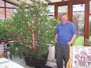 Пошаговая инструкция по выращиванию денежного дерева