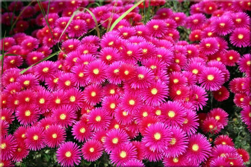 Дубочки, цветы