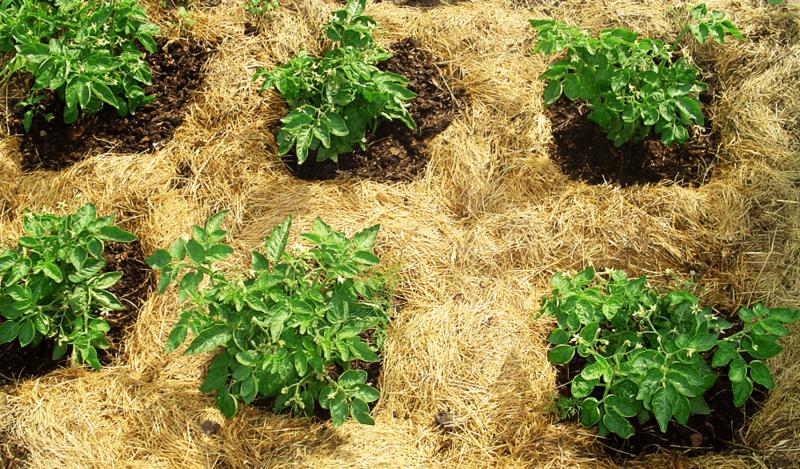 Категории плодородных почв