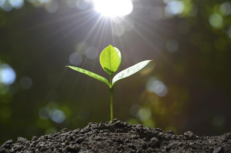 Основные факторы плодородия почв