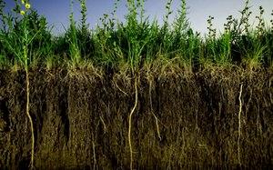 Изменения почвы в процессе использования