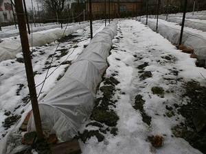 Материал для укрытия винограда