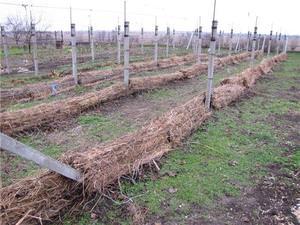 Укрывной материал для винограда на зиму