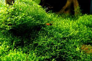 Какой бывает мох