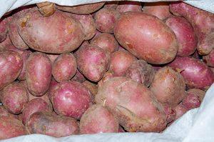 Разновидности сортов картофеля