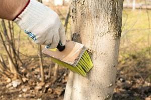 Обработка деревьев осенью на зиму