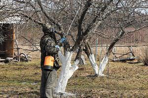 Обработка плодовых деревьев осенью