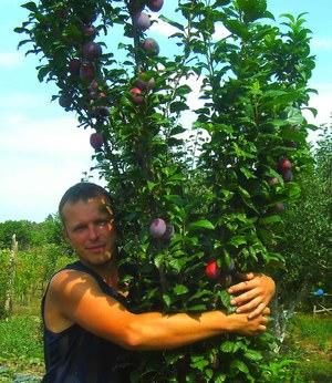Как посадить плодовые деревья в саду
