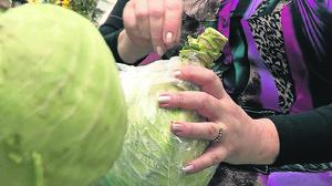 Как срезать капусту