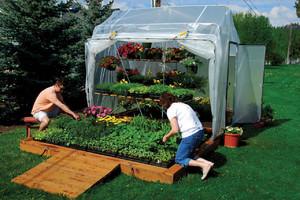 Как посеять в теплице зелень