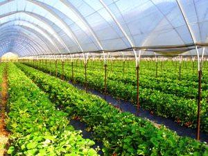 Выращивание свежей зелени как бизнес идея