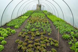 Как посадить зелень