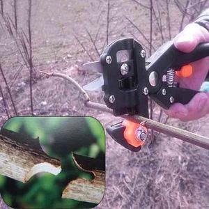 Когда можно прививать фруктовое дерево, как лучше это делать