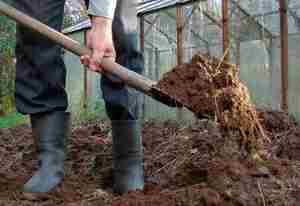 Когда известковать почву весной или осенью