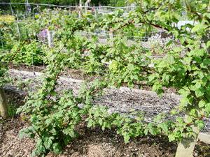 Как ухаживать за кустарником