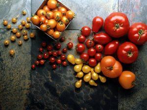 Помидор - это ягода или овощ