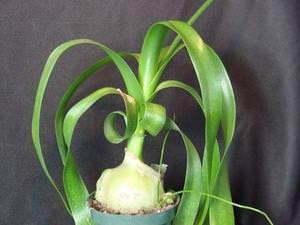 Выращивание цветка в домашних условиях