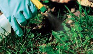 Использование средства Торнадо против сорняков