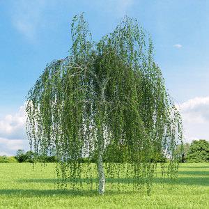 Самое быстрорастущее дерево в России