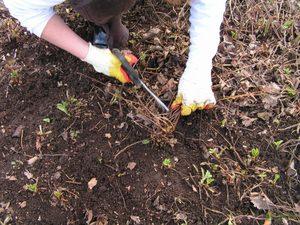 Как вырастить клубнику на участке