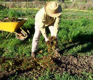 Как ухаживать за растениями в саду и огороде
