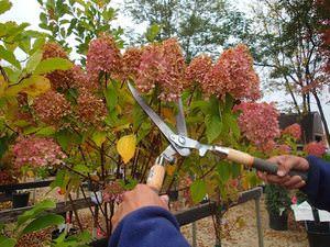 Подготовка цветка к зимовке