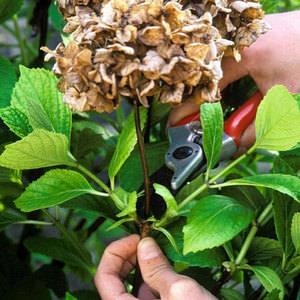 Уход за растением в суровых условиях