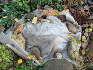 как хризантемы подготовить к зиме