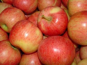 Яблоки гала где растут