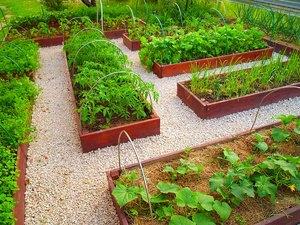 Ленивый огород с чего начать