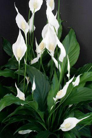 Декоративные цветы для комнатного разведения или растительность в аквариум
