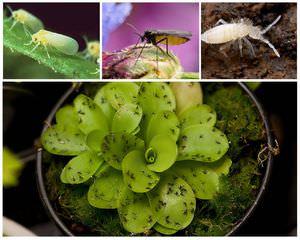 Как избавить растения от мошкары