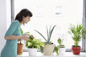Насекомые на растениях