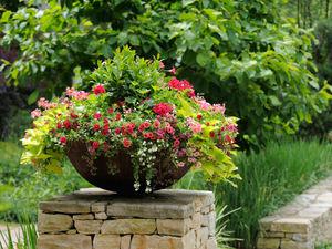 Растения которые растут во дворе
