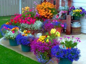 Какие растения чаще всего используются для посадки во дворе