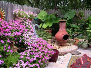 Названия растений во дворе