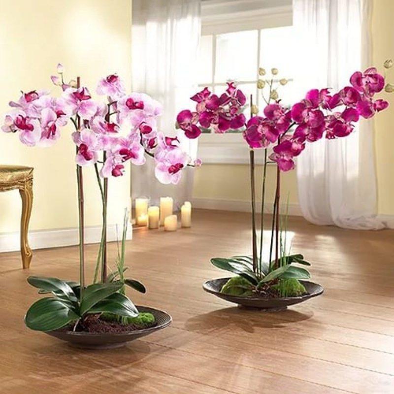 Рассадка орхидей в домашних условиях