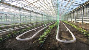 Парники для выращивания овощей