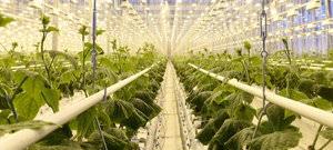 Выращивание овощей в теплице как бизнес идея
