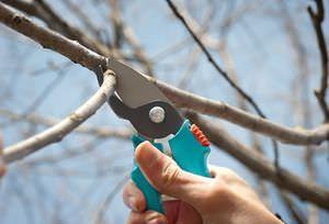 Как правильно производить обрезку деревье