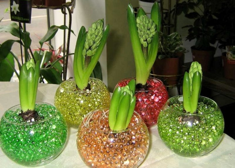 Гидрагель - отличное средство при звсыхании растений