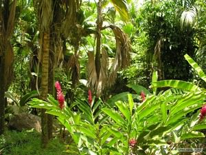 raznovidnosti_tropicheskiy ТОП 10 удивительных растений тропических дождевых лесов