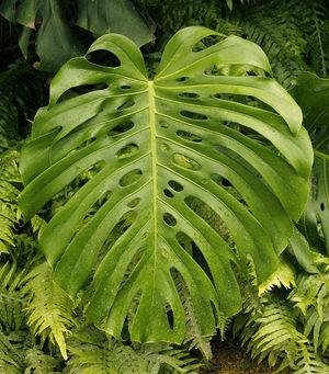 vidy_tropicheskih_rasteniy ТОП 10 удивительных растений тропических дождевых лесов