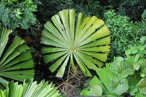 osobennosti_tropicheskih ТОП 10 удивительных растений тропических дождевых лесов