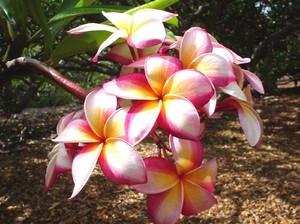 redkie_tropicheskie_rasteniya ТОП 10 удивительных растений тропических дождевых лесов