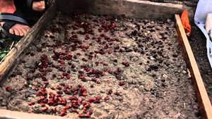 Необходимый состав почвы для проращивания