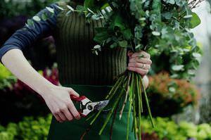 Как развести розы черенками из букета