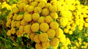 Цветок с желтыми лепестками