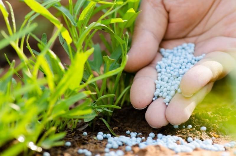 Фосфорное удобрение растений