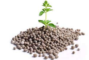 Значение фосфора в жизни растений